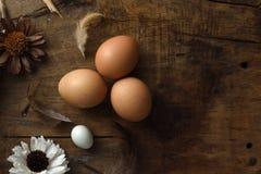 El estudio tiró de huevos en un fondo de madera del vintage Fotografía de archivo