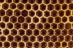 El estudio tiró de la miel orgánica auténtica en el panal - comida sana Foto de archivo