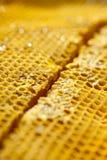 El estudio tiró de la miel orgánica auténtica en el panal - concepto sano de la comida Imagen de archivo libre de regalías
