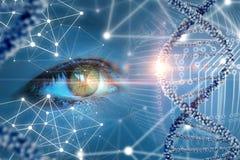 El estudio y la observación de la DNA foto de archivo libre de regalías