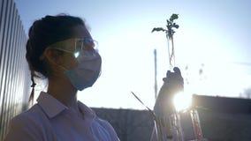 El experimento ecológico, técnico de laboratorio en los vidrios mira el espécimen de verdor genético modificado en los tubos de e almacen de metraje de vídeo