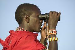 El explorador del Masai con los prismáticos busca animales durante una impulsión turística del juego en la conservación de la fau Imagen de archivo