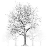 Árbol desnudo grande sin las hojas (árbol de Sakura) - dé exhausto stock de ilustración