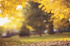 El extracto del otoño empañó el fondo con las luces mágicas Fotos de archivo