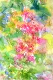 El extracto florece la pintura de la acuarela Primavera multicolora Imágenes de archivo libres de regalías