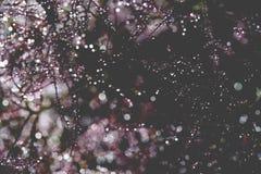 El extracto hermoso, bokeh del agua cae en una planta Imagen de archivo libre de regalías