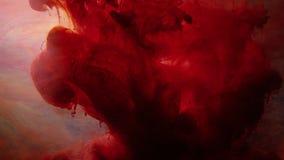 El extracto rojo del agua de la infusión de la tinta pinta flujo del movimiento almacen de video
