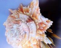 El extracto sacó ejemplo de la concha 3D Imagen de archivo