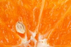 El extremo cercano para arriba de una mitad cortó la mandarina con una semilla Fotos de archivo libres de regalías
