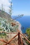 El extremo del camino en Madeira Imágenes de archivo libres de regalías