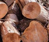 El extremo del pino cortado abre una sesión una pila apilada con consideró marcas Fotografía de archivo libre de regalías