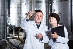 El fabricante del experto y del vino estima calidad del vino rojo en copa fotografía de archivo libre de regalías