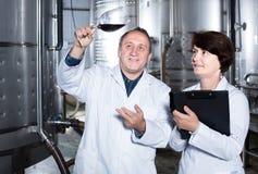 El fabricante del experto y del vino estima calidad del vino rojo en copa imagen de archivo libre de regalías