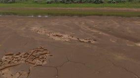El fango se seca y se encrespa en calor del verano en un waterhole metrajes