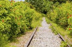 El ferrocarril abandonado Imagen de archivo libre de regalías