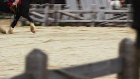 El festival medieval del montar a caballo Maestría de los jinetes de los trucos impresionantes del caballo metrajes
