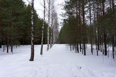 El filtro de Instagram del bosque del invierno inspira escenas del soporte, Fotografía de archivo