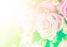 El filtro ligero del vintage de la flor de Rose y el filtro de color aplican diseño y el fondo Imágenes de archivo libres de regalías