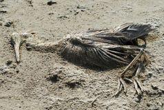 El flamenco muerto imagen de archivo libre de regalías