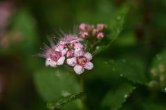 El flor Fotografía de archivo