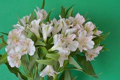 El flor blanco florece el fondo verde Imagen de archivo libre de regalías