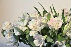 El flor blanco florece las hojas verdes Imagen de archivo