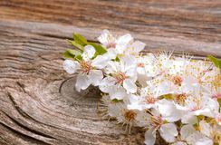 El flor de la primavera florece el albaricoque en fondo de madera Fotografía de archivo