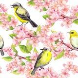 El flor de la primavera, pájaros en las ramas con la cereza, manzana, Sakura florece Modelo inconsútil floral watercolor stock de ilustración