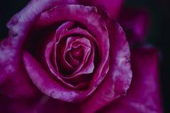 El flor subió fotografía de archivo