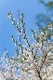 El florecimiento de la primavera Imágenes de archivo libres de regalías