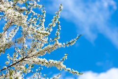 El florecimiento de la primavera Imagenes de archivo