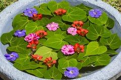 El florero se llena de agua y se adorna con las hojas verdes y las flores hermosas en jardín tropical Isla Mauricio Fotografía de archivo libre de regalías