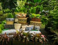 El florero y el pote con venta hermosa del adorno y del color en planta almacenan Jakarta admitida foto Indonesia Fotografía de archivo
