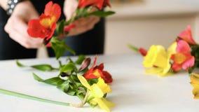 El florista arregla arte de la afición de la composición de la flor almacen de metraje de vídeo