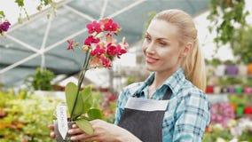 El florista de sexo femenino toma la orquídea con vapor largo y flores rojas en el centro de jardín metrajes