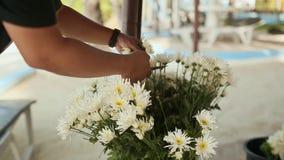 El florista prepara un ramo de flores blancas para una celebración festiva metrajes
