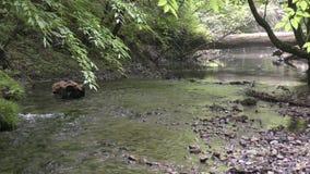 El fluir apacible bajo del arroyo almacen de video