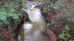 El flujo de agua en el río almacen de metraje de vídeo