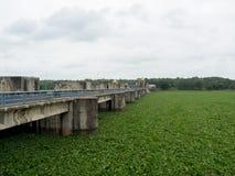 El flujo del jacinto de agua por el río y cubre toda la superficie del río en presa superior causó un problema enorme en la irrig imagenes de archivo
