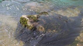 El flujo rápido del río con agua de los lavados de color esmeralda de piedra con las algas metrajes