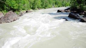 El flujo rápido y turbulento del río Chuya de la montaña intercalado en las orillas rocosas del bosque pantanoso metrajes