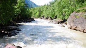 El flujo rápido y turbulento del río Chuya de la montaña intercalado en las orillas rocosas del bosque pantanoso almacen de metraje de vídeo