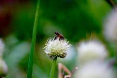 El foco de la abeja Imágenes de archivo libres de regalías