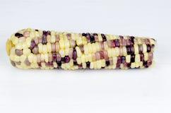 El foco seleccionado de un solas amarillo y púrpura hirvió maíz Imágenes de archivo libres de regalías