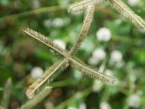 El foco selectivo de la flor de la hierba con verde empañó el fondo Imagen de archivo libre de regalías