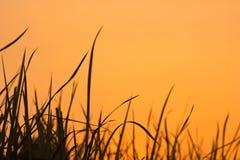 El foco y la falta de definición suaves florecen en fondo de la puesta del sol Fotos de archivo