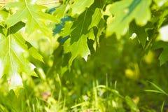 El follaje de árboles y de la hierba en verano Foto de archivo libre de regalías