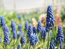 El follaje de la primavera colorea día soleado Foto de archivo