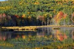 El follaje de otoño reflejó en el agua del pantano en New Hampshire Imagenes de archivo