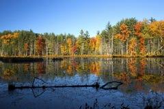 El follaje de otoño reflejó en el agua del pantano en New Hampshire Imagen de archivo